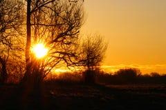 Il sole colora l'albero nell'alba Immagini Stock