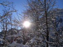 Il sole dà una occhiata a attraverso i rami innevati nelle montagne Untersberg, alpi, Baviera Fotografia Stock