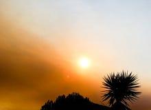 Il sole del cielo si appanna il tramonto unico del fondo blu rosso della palma Immagini Stock