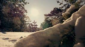 Il sole dell'inverno attraversa i rami innevati dell'abete stock footage
