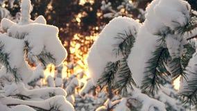 Il sole dell'inverno attraversa i rami innevati dell'abete video d archivio