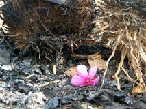 il sole di fotografia della natura fiorisce i inscets di creatività dell'argilla Fotografia Stock Libera da Diritti