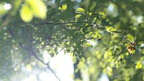 Il sole di mattina viene su tramite le foglie all'alba video d archivio