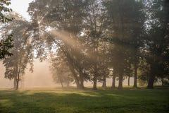 Il sole di primo mattino rays splendere tramite le foglie fotografia stock