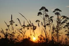 Il sole di sera nell'erba, tramonto. Fotografia Stock