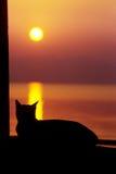 Il sole di sorveglianza del gatto va giù Fotografie Stock Libere da Diritti