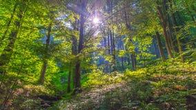 Il sole dietro la foresta Fotografia Stock
