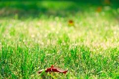 Il sole e l'erba di pomeriggio Fotografie Stock