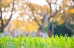 Il sole e l'erba di pomeriggio Fotografia Stock