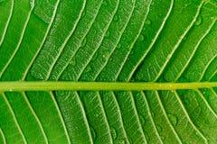 Il sole luminoso contro la parte posteriore di grande foglia tropicale ha trovato in mio Fotografie Stock Libere da Diritti