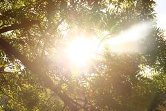 Il sole negli alberi, il sole luminoso nel fogliame Immagini Stock