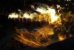 Il sole nel web Fotografia Stock Libera da Diritti