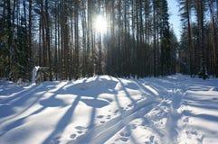 Il sole nella foresta di inverno Fotografia Stock