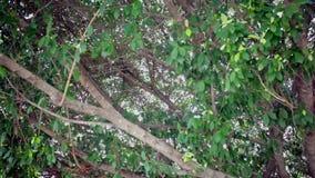 Il sole o il sole rays tramite le foglie nei precedenti della foresta, la cottura della macchina fotografica sparati in HD archivi video