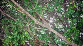 Il sole o il sole rays tramite le foglie nei precedenti della foresta, la cottura della macchina fotografica sparati in HD stock footage