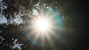 il sole splende attraverso fogliame stock footage