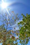 Il sole splende attraverso gli alberi tropicali Rilassamento vacanza fotografia stock libera da diritti