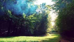 Il sole splende attraverso le foglie e la nebbia Fumo nella foresta di magia della foresta archivi video