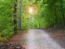 Il sole splende fra gli alberi Fotografia Stock