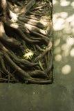 Il sole splende sopra le radici dell'albero fotografia stock