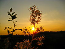 Il sole sui rami Immagine Stock Libera da Diritti