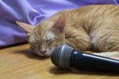 Il sonno del gatto Immagini Stock Libere da Diritti