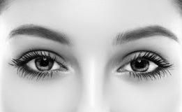Il sopracciglio della donna degli occhi osserva le sferze in bianco e nero Fotografie Stock