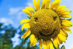 Il sorriso del girasole Fotografia Stock