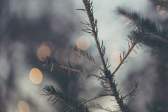 Il sottobosco di Natale con il cerchio della sfuocatura accende il fondo Fotografia Stock