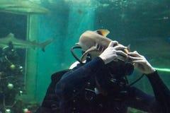 Il subaqueo gioca con lo squalo gatto fotografia stock libera da diritti