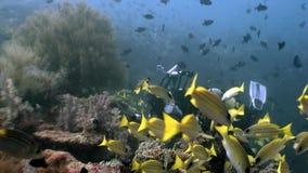 Il subaqueo nel underwater del pesce della scuola si rilassa il fondo video d archivio
