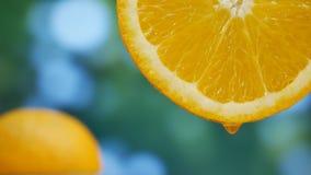 Il succo cade i flussi giù su frutta arancio in giardino stock footage