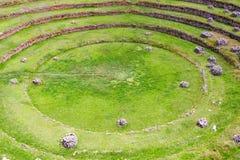 Il Sudamerica, Moray, Cusco, Perù Immagine Stock