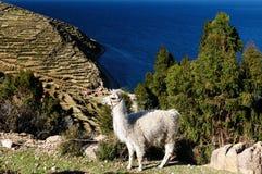 Il Sudamerica, paesaggio del lago Titicaca Immagini Stock