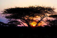 Il Sun africano della regolazione Fotografia Stock