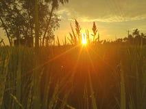 Il Sun aumenta in India immagini stock