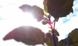 Il Sun compare da nuvoloso, una vista differente Immagini Stock