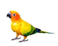 Il Sun evoca l'ara del pappagallo fotografia stock libera da diritti