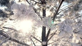 Il Sun nel telaio attraverso i rami di albero nell'inverno di brina è tempo di Natale archivi video
