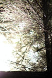 Il Sun perfora attraverso la foresta fotografia stock