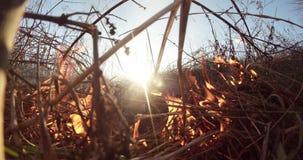 Il Sun splende attraverso il fumo ed il fuoco, erba asciutta bruciante e cespugli nella molla in anticipo o nella caduta tarda archivi video