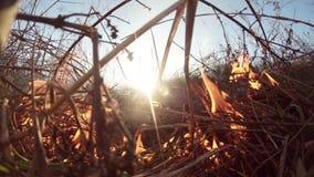 Il Sun splende attraverso il fumo ed il fuoco, erba asciutta bruciante e cespugli nella molla in anticipo o nella caduta tarda stock footage