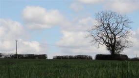 Il Sun splende & belle nuvole celesti in cielo blu sopra l'albero solo del campo di erba - appanni lo scape, bella scena della na video d archivio