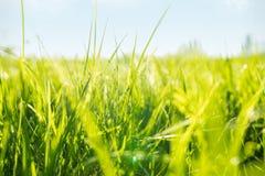Il Sun splende su erba verde immagini stock libere da diritti