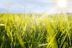 Il Sun splende su erba verde fotografie stock