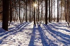 Il Sun splende tramite il percorso degli alberi nel sole soleggiato dell'inverno della foresta Immagine Stock Libera da Diritti