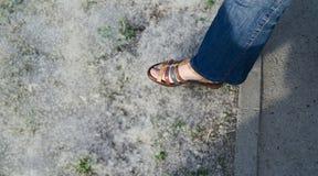 Il suolo è coperto di lanugine del pioppo fotografia stock libera da diritti
