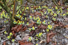 Il suolo in autunno nei colori marroni ed in pianta gialla fiorisce Fotografia Stock Libera da Diritti
