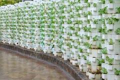 Il suolo libera la coltivazione immagine stock