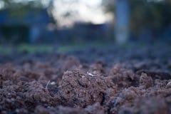 Il suolo è minerali argillosi naturali è naturalmente molte specie suita Fotografia Stock